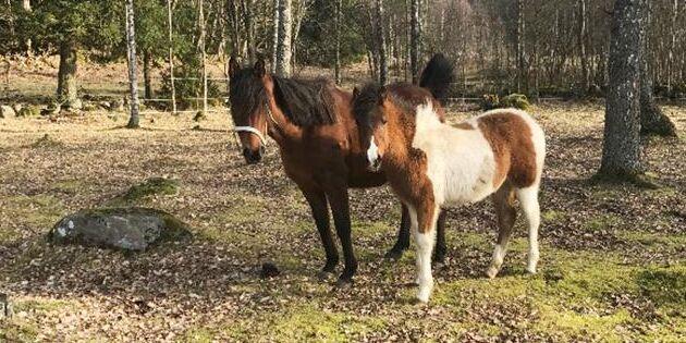 Vanvårdade hästar söker nya ägare