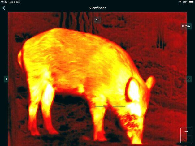 Vildsvinets värme syns i det termiska siktet. Man kan välja färgskala i siktet.