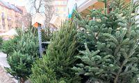 Kraftig prishöjning på julgranar