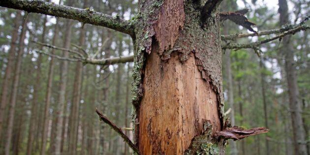17 projekt får forskningspengar av Skogssällskapet