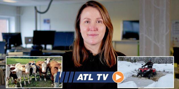 ATL TV: De betalar för kolinlagring
