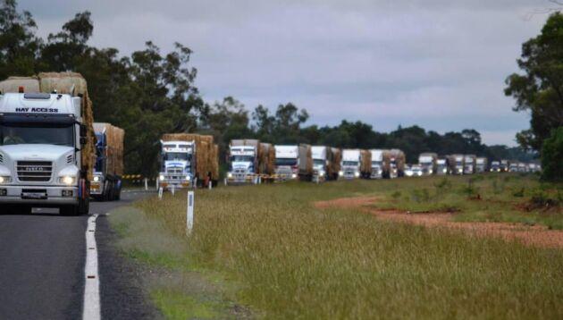 220 lastbilar lastade med hö ska färdas 90 mil och dela ut hö till lantbrukare.