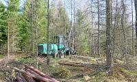 Lönsamheten i skogen i fara