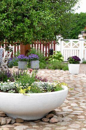 Hos Trine fylls krukorna med blommor för säsongen och kan varieras i urvalet från år till år. Den rymliga, vida terrakottakrukan har målats vit med betongfärg.