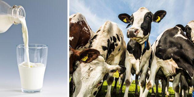 Sverige med i täten när mjölkpris stiger i EU