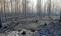 Greenpeace anklagar skogindustrin för dess metoder som brandorsak