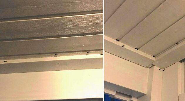 Det kryllar och myllrar av tvestjärtar i förstubrons tak.