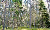 Ris och ros till frivilligt finskt skogsskydd