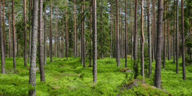 Priset på skog stiger i södra Sverige