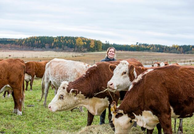 Totalt finns 53 djur på Rörbo lantbruk, varav 17 kor och 15 kalvar. Resten är ungdjur.
