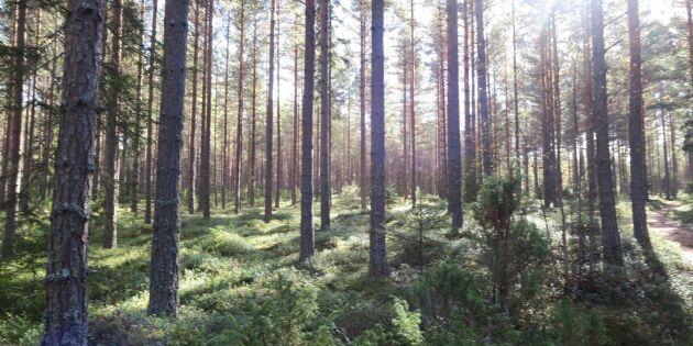 Skogssällskapet förlorade i Högsta domstolen