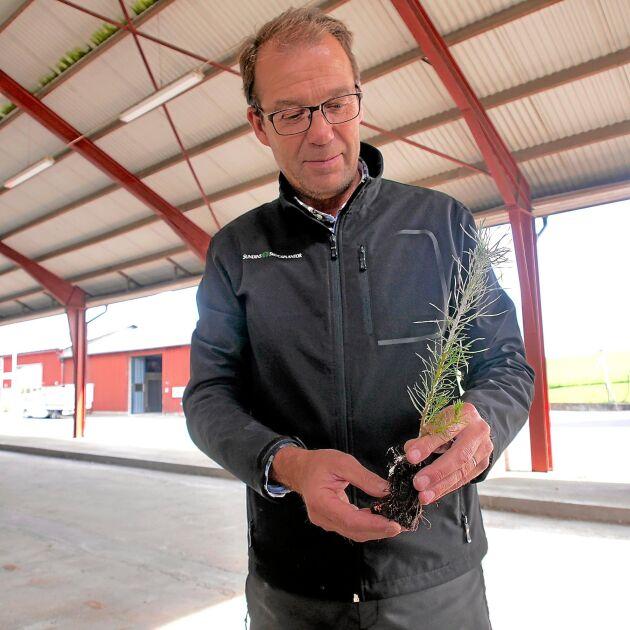 Anders Englund på företaget Ny Skog i Småland har sålt närmare fyra miljoner skogsplantor i år.