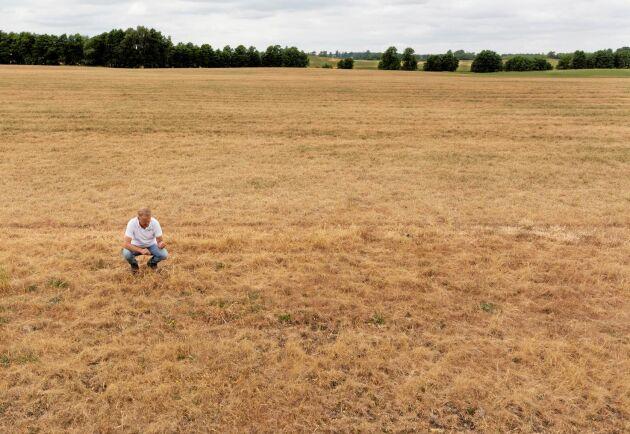 Runt hälften av gräsfröarealen på Å.R.E. handelsbolag i sydöstra Skåne, 60- 70 hektar, har torkat bort i värmen och går inte att tröska. Som lantbrukare måste man leva med en väderrisk, men problemet är att det finns väldigt små marginaler i lantbruket i dag, säger driftsledare Johan Karlzén.