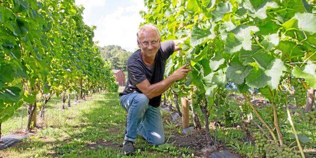 Hans vin fick internationellt pris