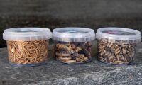 Försäljning av insekter som mat tillåts