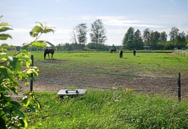 Nästa planerade projekt för Skästa gård är att bygga ut ett nytt hagsystem. På så sätt får de chans att låta sina hagar vila och återhämta sig längre.