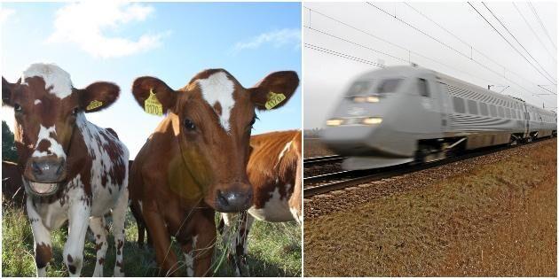 Detta gäller vid olyckor med tåg och tamdjur