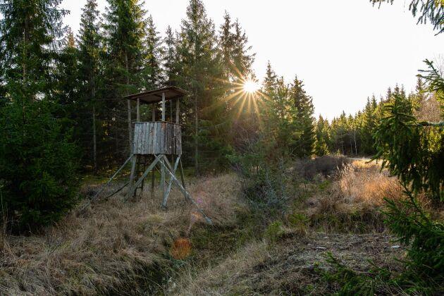 Jakten på Kalerum beskrivs som lovande, med fin älgstam, gott om vildsvin, rådjur och dovhjort. Skogen har kontakt med Östersjön samt andelar i två sjöar som ska ha goda fiskemöjligheter.