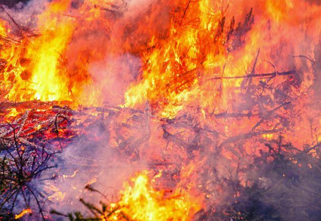 Svårigheter att utreda om det var oaktsamhet eller en olyckshändelse som låg bakom skogsbranden i Tjällmo gör att åklagaren lägger ned utredningen. (Arkivbild)