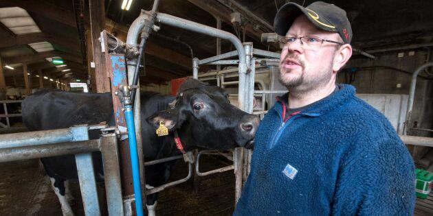 Ovissheten tvingar Åva gård att slakta kor