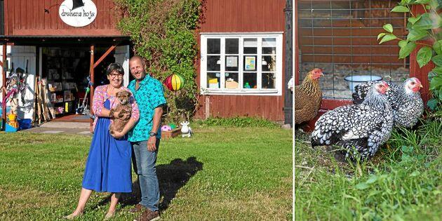 Tyska Ann och Kex förvandlade gården på Öland till café och leksaksbutik