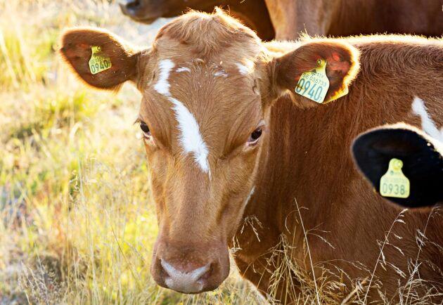 För SDS är det främst de delar som rör införsel från annat EU-land, och import från tredje land, av levande djur och genetiskt material som är aktuella (arkivbild).