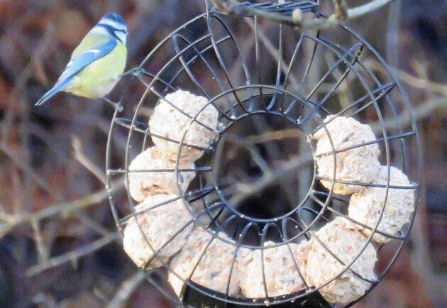 MYCKET MAT. Den hjulformade hållaren kan fyllas ännu mer än så här och håller ställningarna även om du reser bort.