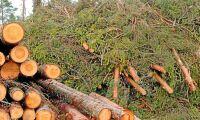 Södras modell sprider vinsterna till skogsägarna