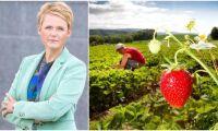 Förslaget: 8000 permitterade kan få jobb i lantbruket