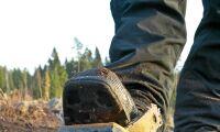 12 steg till lyckad sådd i skogen