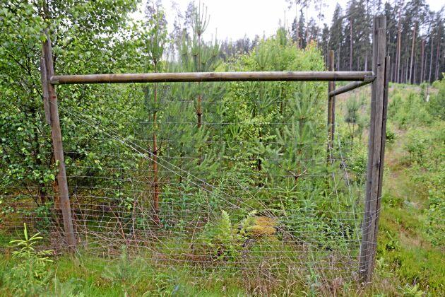 Södras viltdemohägn är uppskattade. Här ute i skogen blir diskussion om viltstammar och skogsbruk levande och konstruktiva.