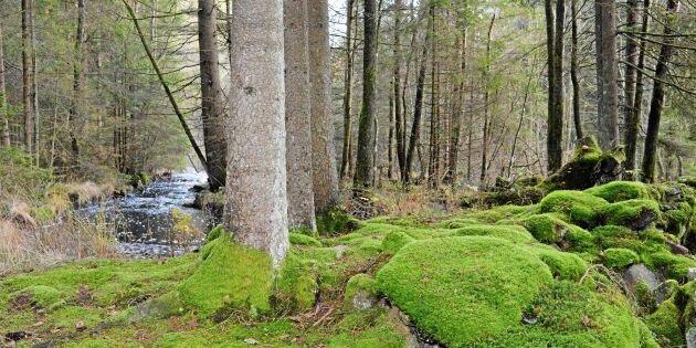 Markägare positiva till naturreservat på egen mark
