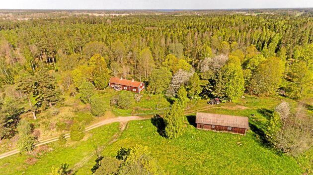 Skogen på Börstorp har enligt köparen Emil Olsson en bra åldersfördelning på 15–45 år.