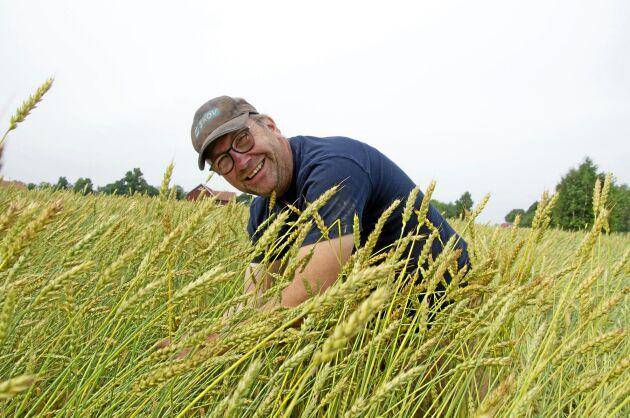 Niclas Dagman är stolt över det västgötska lantvetet, som han är med och bevarar. För åtta år sedan fick han 1,5 kilo. I år odlar han åtta hektar på Markusgården i Grästorp.