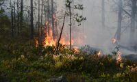 Efter skogsbranden – Motala kräver miljonbelopp i ersättning