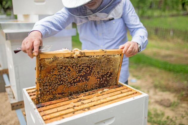 Forskarna vill hellre se att företag lägger resurser på etablering av ängar än bikupor.