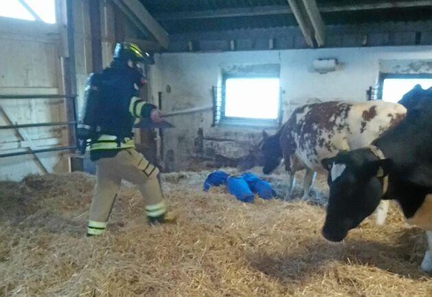 På gården fick deltagarna lära sig att handskas med djuren.