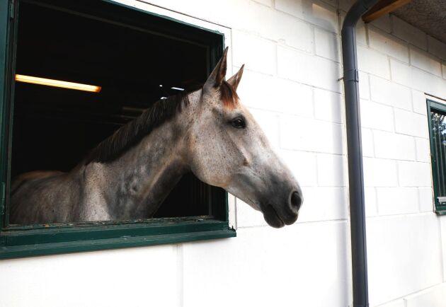 Med i projektet finns allt ifrån rena tech-företag till rehabilitering för häst samt Bed and Box.
