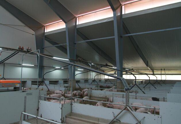 Varje avdelning är en öppen lösning med avskiljande väggar med långtråg för blötutfodring. Över trågen finns en nivågivare som reglerar tilldelningen.