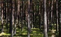 Svensk gåva finansierar skogsforskning