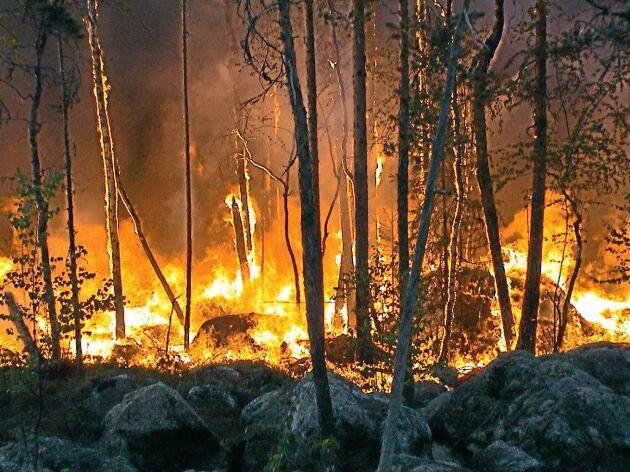 Skogsbrand. Genrebild