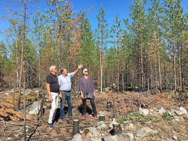 Ett år senare. På vissa platser har det brunnit i marken, men trädkronorna är fortfarande gröna. Björn Brink visar hur hans skog har tagit skada för Eskil Johansson och Ulla Balkefors, bekanta som är på besök.