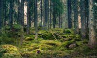 Mer pengar till hållbar skogsforskning