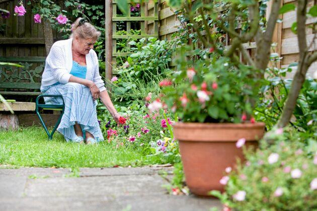 En bärbar liten trädgårdspall är värdefullt att kunna använda intill låga rabatter eller pallkragar.