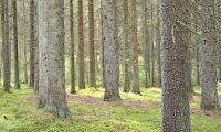 Fond vill köpa skog för miljarder