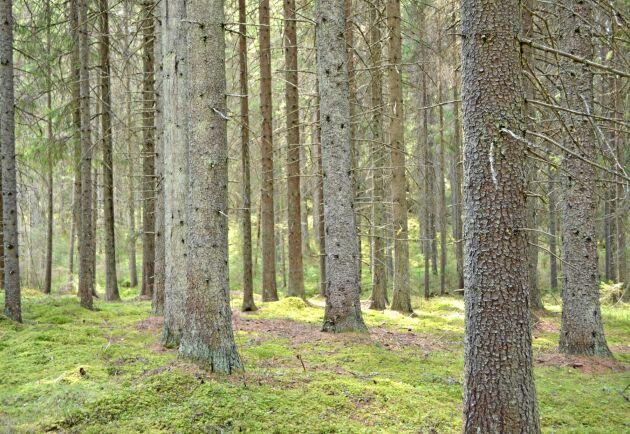 Fonden Silvestica Green Forest vill köpa skog för miljarder i Östersjöområdet de kommande åren.