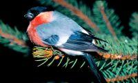 Framåt för skogsfåglar i Västmanland