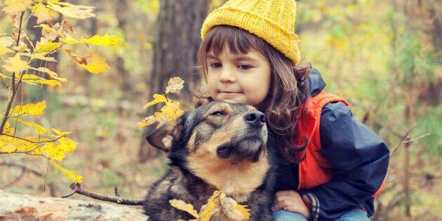 Därför är det så bra att växa upp med hund