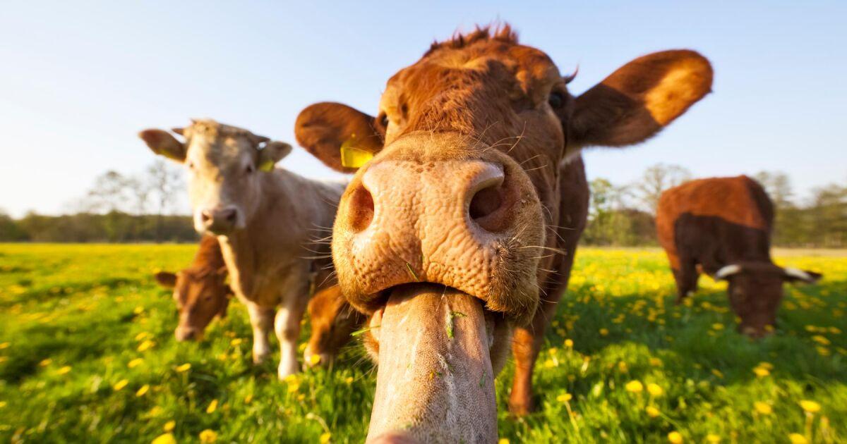 Attraktiva Få gratis hjälp att sätta upp stängsel | Land Lantbruk YG-61