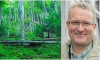 """""""Skulle själv aldrig göra skogsaffärer i Rumänien"""""""
